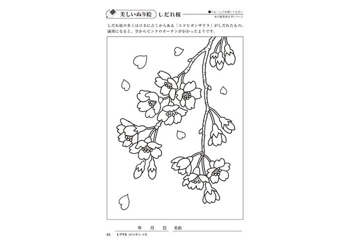 しだれ桜 高齢者介護をサポートするレクリエーション情報誌レクリエ
