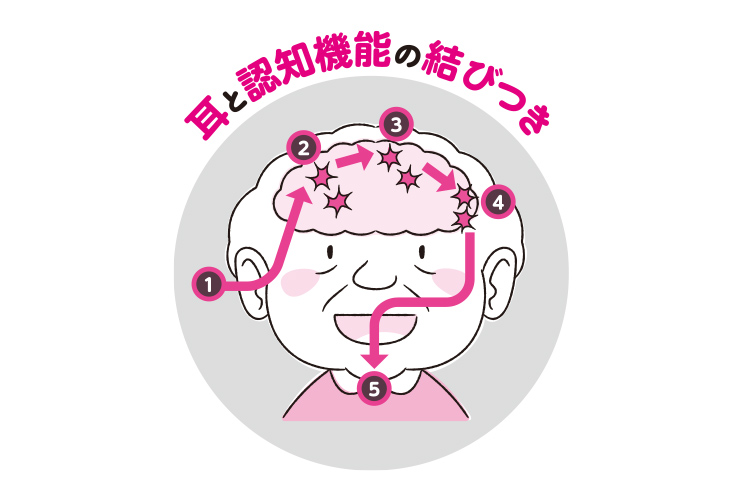 難聴が認知症の発症を招くメカニズム